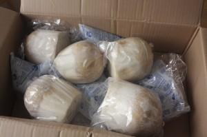 Zásilka s 5 ks mladých thajských kokosů