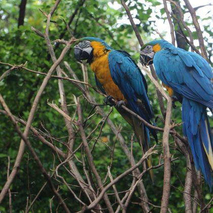 Dalších šest videí z Ekvádoru (Guayaquil, Tichý oceán, Cuenca)